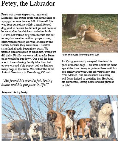 Petey the Labrador story